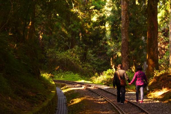 阿里山水山巨木步道